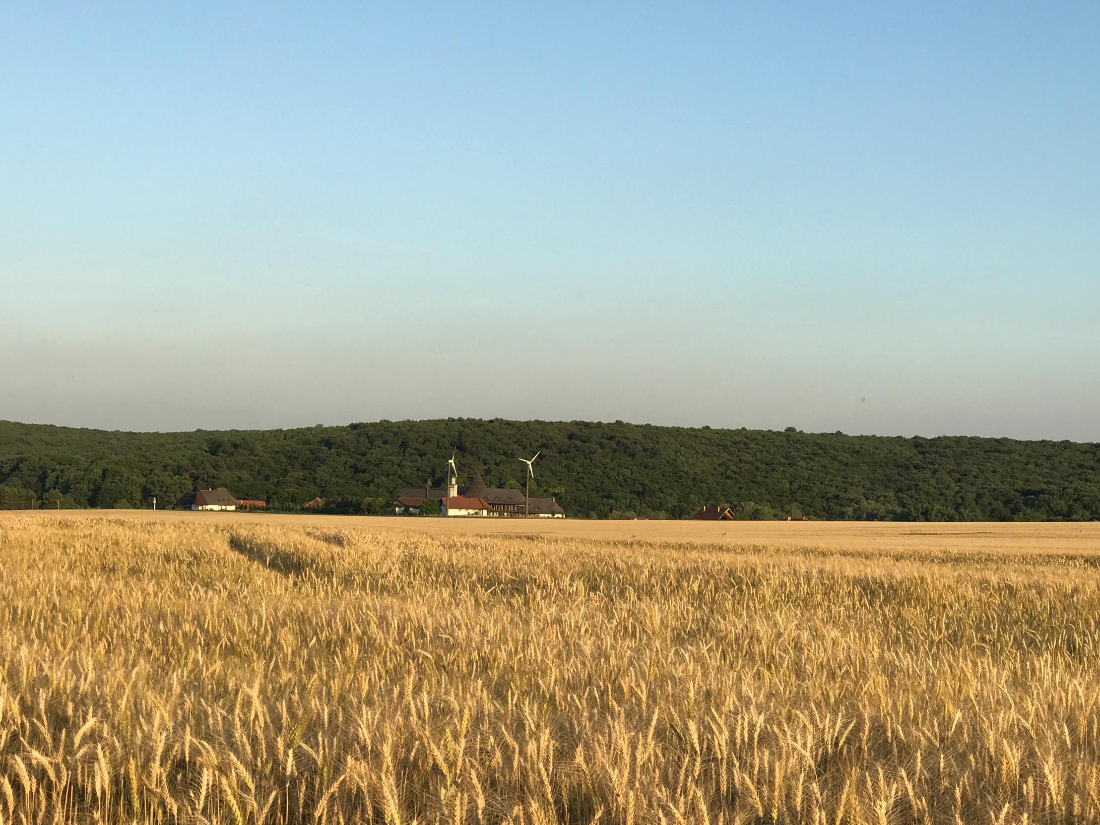Ungarn-Feld